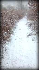Peace on a Snow-covered Path